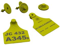 Imagen de carabana tarjeta y caravana botón en color amarillo, con todos los datos