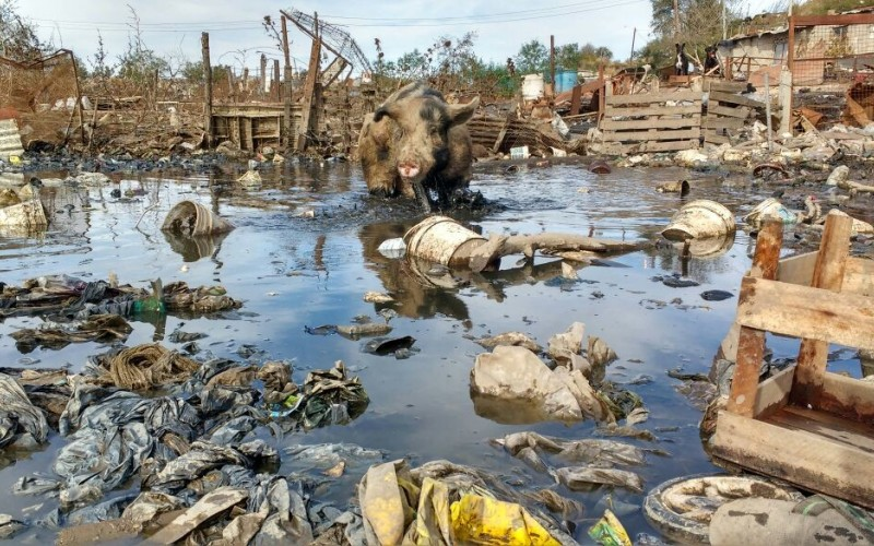 Río Cuarto: decomiso de 86 porcinos que eran alimentados con basura ...