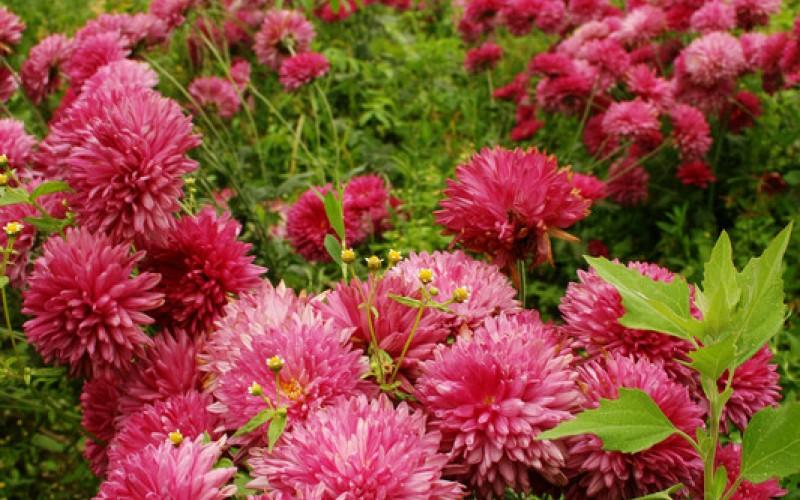 Ornamentales senasa for Plantas ornamentales